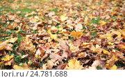 Купить «fallen autumn maple leaves on meadow», видеоролик № 24781688, снято 13 октября 2016 г. (c) Syda Productions / Фотобанк Лори