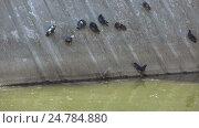 Pigeons in park on inclined plane. Стоковое видео, видеограф Потийко Сергей / Фотобанк Лори