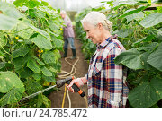 Купить «senior couple with garden hose at farm greenhouse», фото № 24785472, снято 25 августа 2016 г. (c) Syda Productions / Фотобанк Лори
