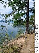 Купить «Сосны на берегу озера Тургояк», фото № 24794476, снято 13 августа 2016 г. (c) Александр Тараканов / Фотобанк Лори