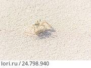 The Small Crab on the Beach. Стоковое фото, фотограф Александр Бекишев / Фотобанк Лори