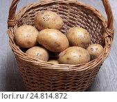 Купить «Клубни сырого картофеля в плетеной корзине», эксклюзивное фото № 24814872, снято 5 января 2017 г. (c) Яна Королёва / Фотобанк Лори