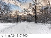 Купить «Пешеходные дорожки в ботаническом саду в Останкине, Москва», фото № 24817960, снято 15 декабря 2016 г. (c) Юрий Лобанов / Фотобанк Лори