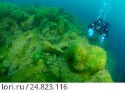 Зеленые водоросли (Chlorophyta) озеро Байкал, Сибирь, Российская Федерация, Евразия. Стоковое фото, фотограф Некрасов Андрей / Фотобанк Лори