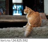 Купить «Кошка сидит на крыльце старой фермы», фото № 24825592, снято 22 января 2018 г. (c) Ирина Козорог / Фотобанк Лори