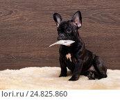 Купить «Собака держит в зубах купюру 50 долларов», фото № 24825860, снято 18 июня 2019 г. (c) Ирина Козорог / Фотобанк Лори