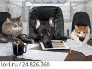 Купить «Бизнесмены в офисе. Собака и кошки - сотрудники, менеджеры», фото № 24826360, снято 10 января 2018 г. (c) Ирина Козорог / Фотобанк Лори