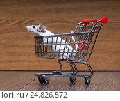 Купить «Мышь сидит в тележке для покупок», фото № 24826572, снято 16 октября 2018 г. (c) Ирина Козорог / Фотобанк Лори