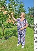 Купить «Пожилая женщина в саду у молодой яблони показывает урожай», фото № 24827032, снято 6 августа 2016 г. (c) Ирина Носова / Фотобанк Лори