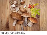 Собранные грибы, вид сверху. Стоковое фото, фотограф Olga Far / Фотобанк Лори