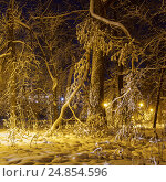 Купить «Красивая ветка дерева в парке в зимой», фото № 24854596, снято 20 декабря 2016 г. (c) Дмитрий Тищенко / Фотобанк Лори