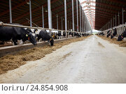 Купить «herd of cows eating hay in cowshed on dairy farm», фото № 24854908, снято 12 августа 2016 г. (c) Syda Productions / Фотобанк Лори