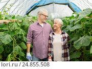 Купить «happy senior couple at farm greenhouse», фото № 24855508, снято 25 августа 2016 г. (c) Syda Productions / Фотобанк Лори