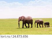 Купить «Three African elephants moving according to height», фото № 24873656, снято 16 августа 2015 г. (c) Сергей Новиков / Фотобанк Лори