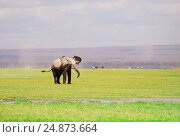 Купить «African elephant with flapping ears in savannah», фото № 24873664, снято 16 августа 2015 г. (c) Сергей Новиков / Фотобанк Лори