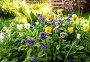 Красивые цветы анютины глазки растут на клумбе в саду, фото № 24876580, снято 17 января 2017 г. (c) FotograFF / Фотобанк Лори