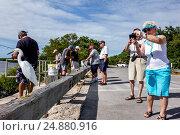 Florida, Sanibel Island, J. N. J.N. JN Ding Darling National Wildlife Refuge, snowy egret, picture, (2016 год). Редакционное фото, фотограф Jeff Greenberg / age Fotostock / Фотобанк Лори