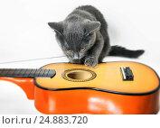 Купить «Музыкант. Серый котенок играет с гитарой на белом фоне», фото № 24883720, снято 13 января 2017 г. (c) Элина Гаревская / Фотобанк Лори