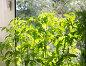 Рассада помидор на подоконнике, фото № 24889096, снято 15 апреля 2012 г. (c) Дудакова / Фотобанк Лори