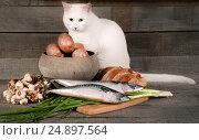 Натюрморт из картофеля, хлеба, рыбы, лука и чеснока, на деревянном фоне с белым котом. Стоковое фото, фотограф Беляева Юлия / Фотобанк Лори