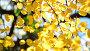 Beautiful autumn leaves backlit, видеоролик № 24899076, снято 18 января 2017 г. (c) Володина Ольга / Фотобанк Лори