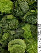 close up of savoy cabbages. Стоковое фото, фотограф Syda Productions / Фотобанк Лори