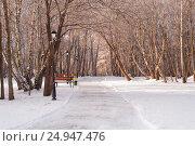 Купить «Зимняя дорожка среди деревьев в городском парке», эксклюзивное фото № 24947476, снято 17 января 2017 г. (c) Svet / Фотобанк Лори