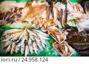 Купить «fish on fish market», фото № 24958124, снято 25 октября 2016 г. (c) Яков Филимонов / Фотобанк Лори