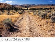 Купить «Jeep track through Western juniper (Juniperus occidentalis) grassland, Between South Fork Wilderness Study Area & Sand Hollow Wilderness Study Area, Prineville...», фото № 24987188, снято 20 июля 2019 г. (c) age Fotostock / Фотобанк Лори