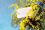8 марта - букет мимозы и карточка с местом для поздравительного текста, фото № 24990060, снято 9 марта 2016 г. (c) Зезелина Марина / Фотобанк Лори