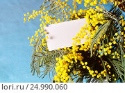 Купить «8 марта - букет мимозы и карточка с местом для поздравительного текста», фото № 24990060, снято 9 марта 2016 г. (c) Зезелина Марина / Фотобанк Лори