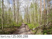 Купить «Spring forest», фото № 25000288, снято 1 мая 2012 г. (c) Дмитрий Тищенко / Фотобанк Лори