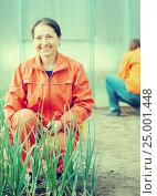 Купить «Happy women works at hothouse», фото № 25001448, снято 2 мая 2012 г. (c) Яков Филимонов / Фотобанк Лори