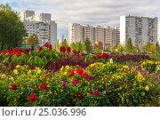 Купить «The sleeping area with flowers in Moscow, Russia», фото № 25036996, снято 30 сентября 2015 г. (c) Володина Ольга / Фотобанк Лори