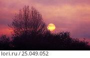 Купить «Trees backlit by mystical sunlight at sunset», видеоролик № 25049052, снято 25 января 2017 г. (c) Serg Zastavkin / Фотобанк Лори