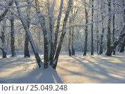 Sunny morning, фото № 25049248, снято 28 января 2017 г. (c) александр жарников / Фотобанк Лори
