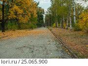 Осенняя аллея. Autumn alley. Стоковое фото, фотограф Игорь Новиков / Фотобанк Лори