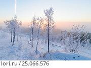 Купить «Birches in hoarfrost, morning, frosty dawn in the Arctic tundra», фото № 25066576, снято 19 января 2014 г. (c) Андрей Радченко / Фотобанк Лори