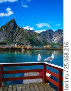 Купить «Lofoten archipelago islands islands Norway», фото № 25068216, снято 2 июля 2016 г. (c) Андрей Армягов / Фотобанк Лори