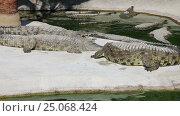 Купить «Scene with Big Crocodile», видеоролик № 25068424, снято 5 февраля 2017 г. (c) Владимир Журавлев / Фотобанк Лори