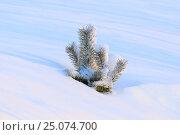 Купить «Молодая сосна среди снега. Ямало-Ненецкий автономный округ», фото № 25074700, снято 6 февраля 2017 г. (c) Григорий Писоцкий / Фотобанк Лори