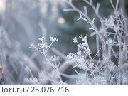 Купить «4 Season winter,beautiful,beauty of nature,calm,chilly,climate,closeup,closeup capture,closeup shot,cold,countryside,covering,Finland,freeze,freeze-up...», фото № 25076716, снято 17 декабря 2016 г. (c) mauritius images / Фотобанк Лори