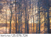 Купить «4 Season winter,beautiful,beauty of nature,calm,chilly,climate,closeup,closeup capture,closeup shot,cold,cold weather,countryside,covering,dry plant,Finland...», фото № 25076724, снято 17 декабря 2016 г. (c) mauritius images / Фотобанк Лори