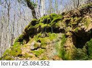 Купить «Зелёный водопад в Крымском весеннем лесу», фото № 25084552, снято 29 марта 2014 г. (c) Выскуб Анна / Фотобанк Лори