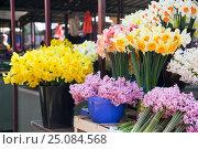 Купить «Нарциссы и гиацинты на рынке Белграда. Сербия», фото № 25084568, снято 17 марта 2016 г. (c) Охотникова Екатерина *Фототуристы* / Фотобанк Лори