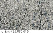 Купить «Branches of tree covered with frost on frosty day», видеоролик № 25086616, снято 30 января 2017 г. (c) Михаил Коханчиков / Фотобанк Лори