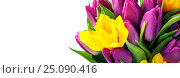 Купить «Spring flowers», фото № 25090416, снято 18 февраля 2016 г. (c) Наталия Кленова / Фотобанк Лори