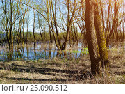 Купить «Forest spring landscape - little forest flooded with overflowing spring water in sunny spring weather», фото № 25090512, снято 5 мая 2016 г. (c) Зезелина Марина / Фотобанк Лори