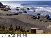Купить «A person standing on the deserted beach at Punta de Lobos in Chile, 2005.», фото № 25108948, снято 16 августа 2018 г. (c) Nature Picture Library / Фотобанк Лори