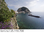 Купить «Little island of Borgo Sant'Angelo, connected to the island of Ischia by a thin isthmus. Bay of Naples, Italy.», фото № 25110708, снято 17 августа 2018 г. (c) Nature Picture Library / Фотобанк Лори